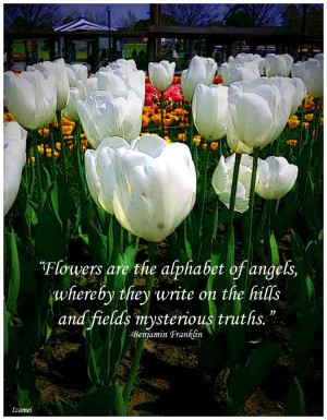 Flowers are the alphabet of angels, whereby they write on the hills ...