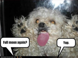 Funny Dog picture with caption full moon again