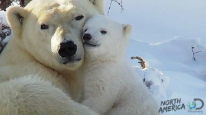 Come snuggle with me, I need a bear hug=) #quotes #bears #polarbears # ...
