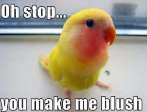Blushing Bird