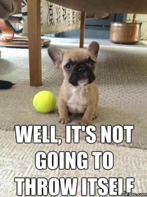 Funny-Cute-dog.jpg
