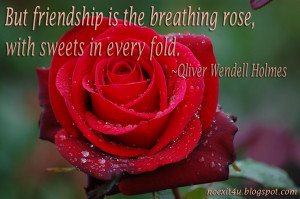 tags free download rose wallpaper rose quotes