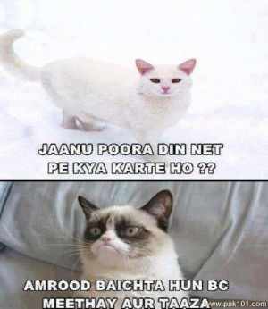 Funny Cat Valentine