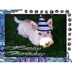scottie_dog_greeting_card.jpg?height=250&width=250&padToSquare=true