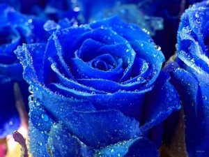 Flowers Pictures | Flowers Wallpapers | Red Roses