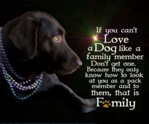 My dogs are my family.