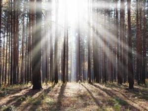 Inspiring Tree Quotes