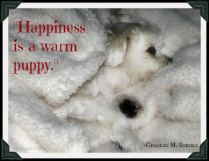 Dog Quotes: Happiness is a Warm Puppy – Gracie's Favorite Blanket