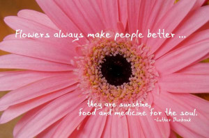 Daisies Daisy Love You Quote Quotes