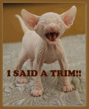 collection of 20 funny but cute animal memes. Make someone laugh ...