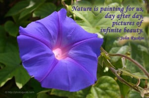 Beautiful Nature Quotes Beautiful pictures of nature
