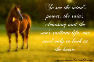 Horse and Rider Quotes Tumblr