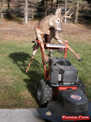 Deer Funny Pictures Hunting Camera Myspace Free