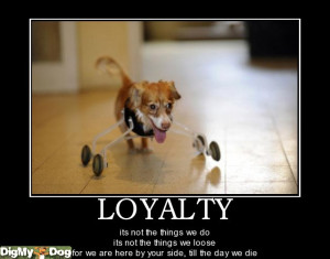 loyalty - dogs