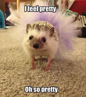 funny hedgehog,