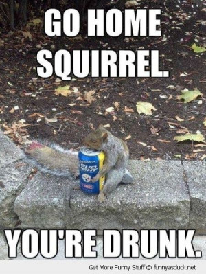squirrel animal holding beer can go home drunk funny pics pictures pic ...
