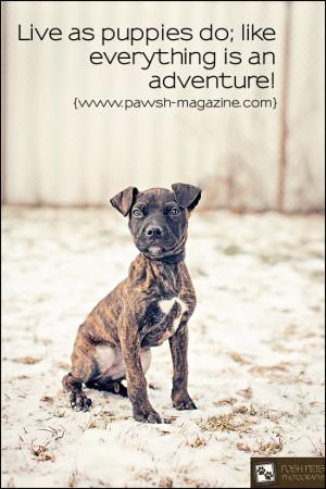 PAWSH-dog-quote-puppy-quote.jpg