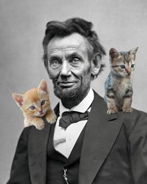 Lincoln-kittens.jpg