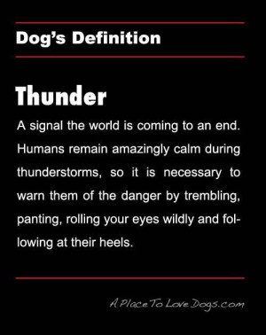 dog's definition of THUNDER