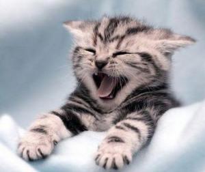 Funny Yawning (9)