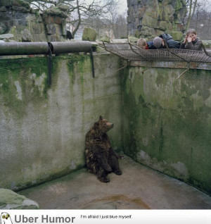 bear sits alone in a pit in the utterly depressing Kaliningrad zoo.
