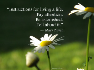 Mary Oliver quote: Instructions for living a life.
