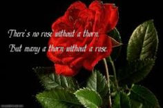 Rose quote EVER!♥ There's no rose without a thorn, But many a thorn ...