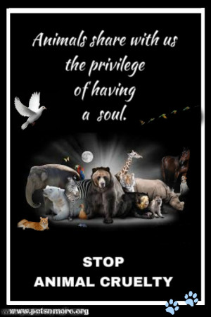 ... pet, animal, inspiring quotes for animal lovers, petsnmore.org, soul