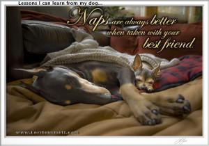 Dog Wisdom About Naps