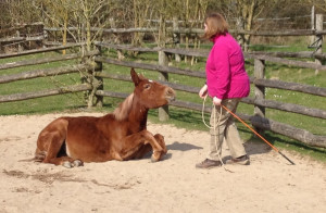 Blog Funny Horse Riding Videos