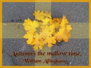 Funny Autumn Quotes1