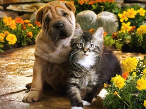 cute puppy and kitten pictures puppy and kitten loving picture puppy ...