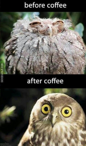 Morning Coffee Owl Meme