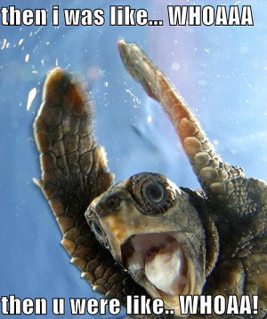 Two sea turtles high five each other underwater.