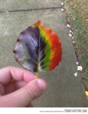 Funny photos funny rainbow leaf colors