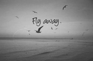 bird, birds, fly, freedom, sea, tumblr