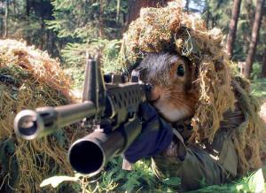 Funny Squirrel Between Trees
