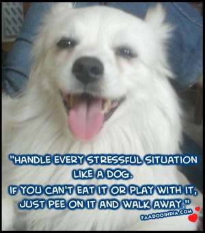Handle every stressful situation Like A Dog. if you can't eat it or ...