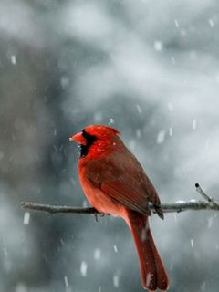Red Bird Quotes | RED BIRD