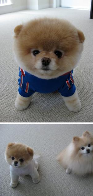 Boo The Dog Khloe Kardashian