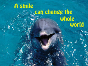 Dolphin In The Sea Quotes. QuotesGram