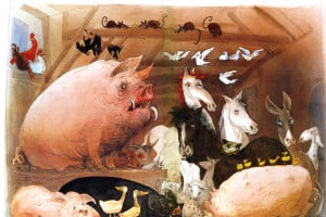 Animal Farm Short List of Quotes for Revision GCSE OCR English Exam