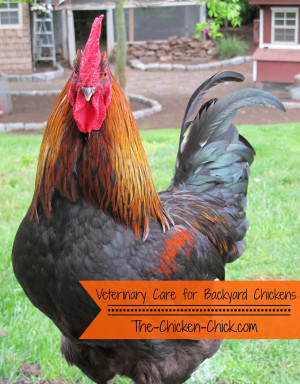 After having had three extremely ill chickens in urgent need of ...