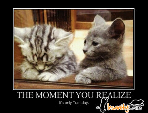 Its Only Tuesday Funny Quote
