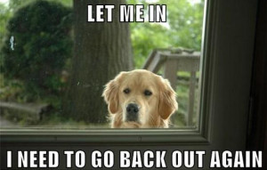 This Is The Best Thing You'll See All Day. Especially If You Own a Dog ...