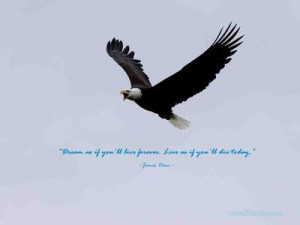 Wallpaper Quotes~~~~~ 115 - Bald Eagle Flying
