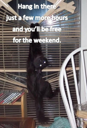 ... caption. You're right... the weekend is almost here! Happy Furriday