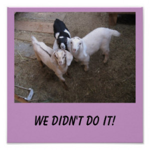 Funny Goat Sayings Gifts