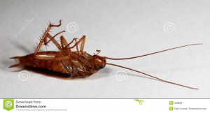 Funny Cockroach Pictures Images Quotes Picture