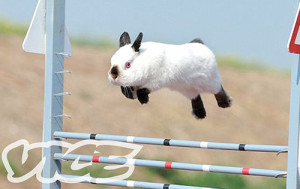 nylce-bunny-show-jumping.jpg